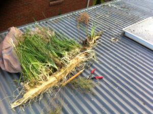 What's growing in our gutters?