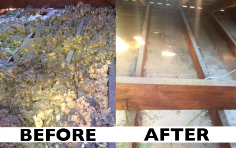 Did you know . . . We clean Ceiling Cavities?