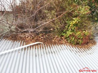 Cleaning Gutters and Pruning Trees in Orange NSW
