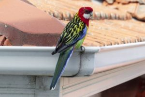 Do you know what is living in your gutters?