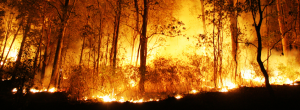 Are You Ready for Bushfire Season?