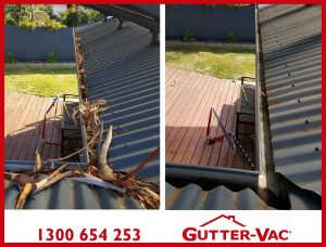 Gutter Cleaning For Gum Trees