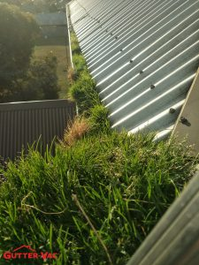 Do You Think This Gutter Guard Is Working?