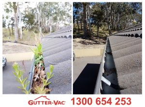 Bush Fire Prevention- Is Gutter Cleaning on Your List?
