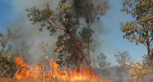 Being bushfire prepared