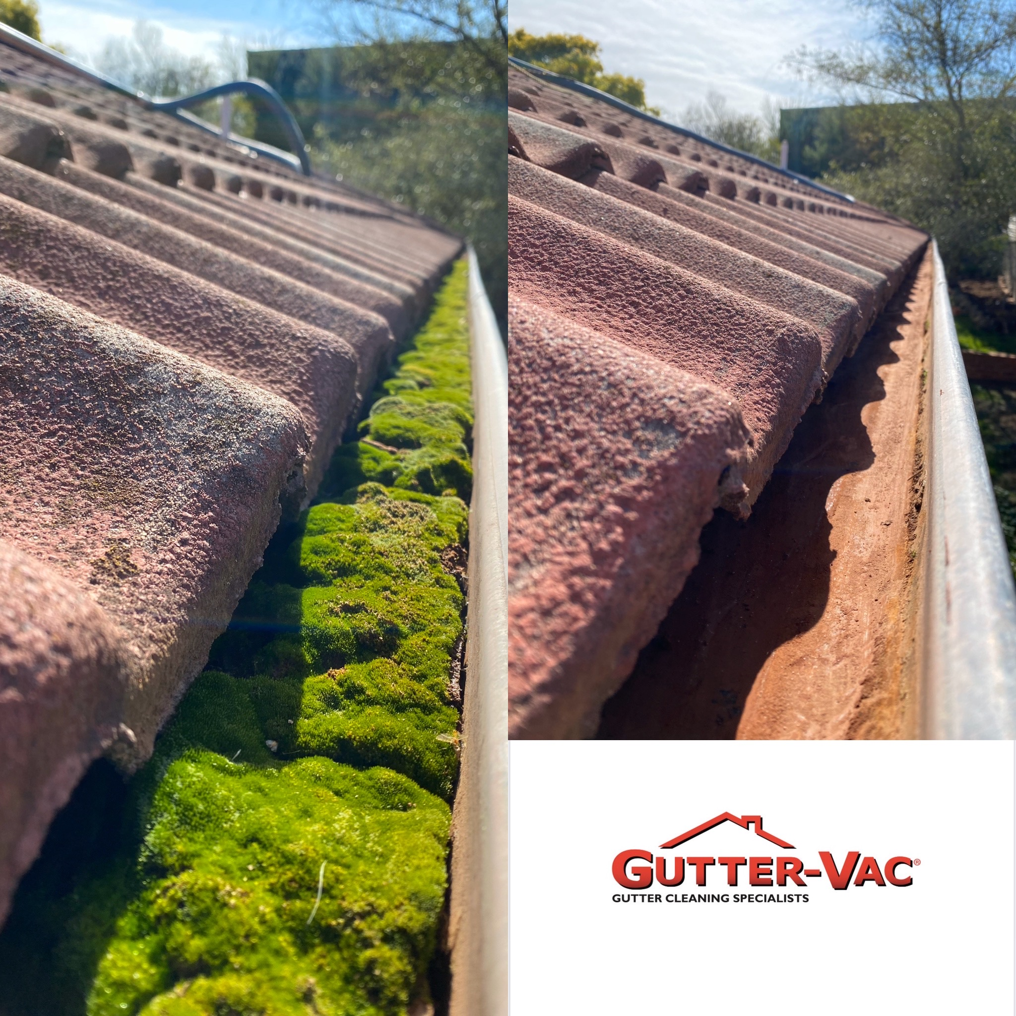 Can you see What's Growing in Your Gutters?