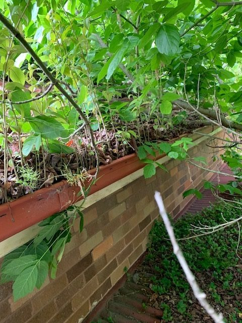 Gutter cleaning & pruning trees in Killarney Heights
