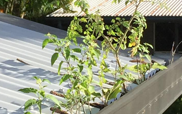 What's growing in your gutters?