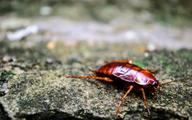 What creepy crawlies are in your gutters?