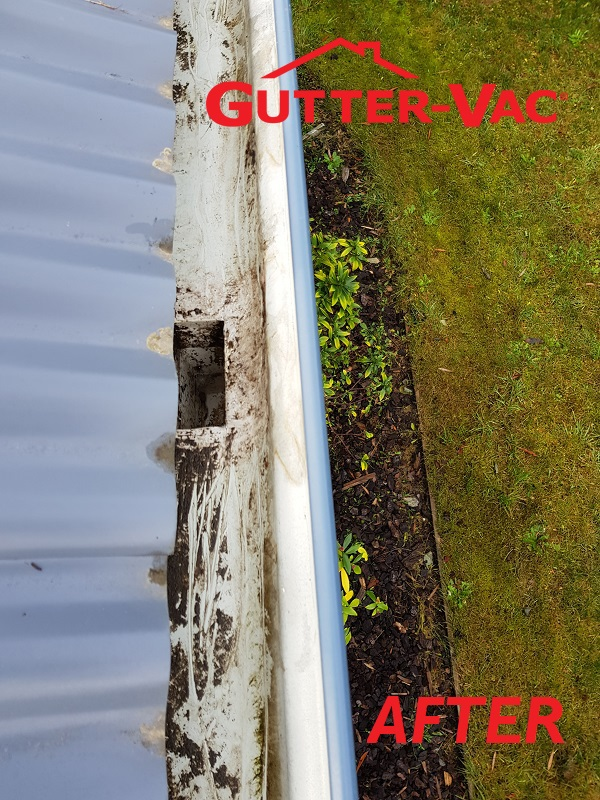 Gutter Clean in Kingston