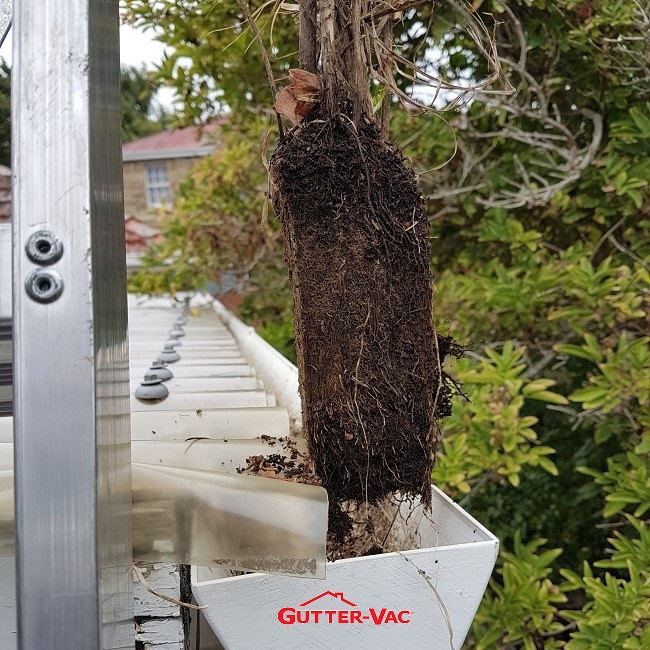 Roots in a Down Pipe Causing Overflow Issues in Mount Stuart